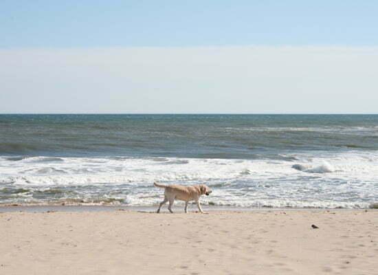 Die Hamptons