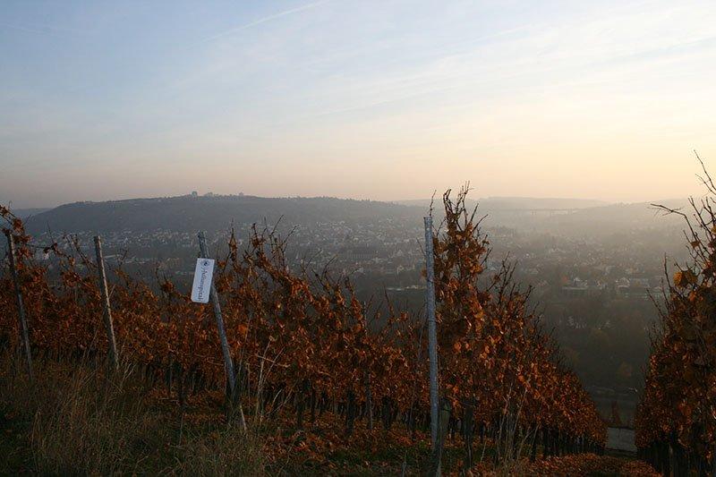 Weinberge von Würzburg