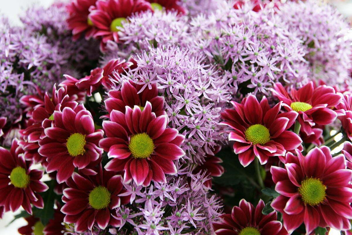 Wossen Asserate: Blumen sind ein ideales Geschenk!