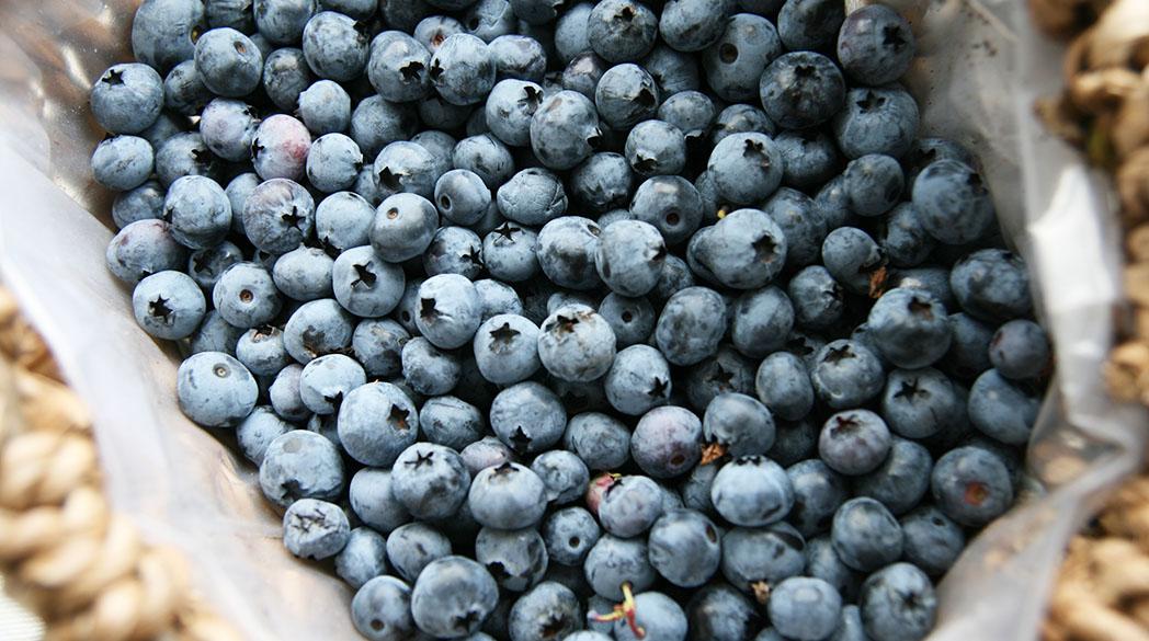 Saison-Rezept: Backen mit Heidelbeeren