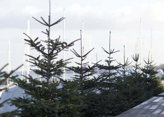 Weihnachten an der Ostsee: Kühlungsborn