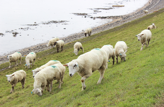 Sylt-Tipp: Radtour über die Insel Sylt