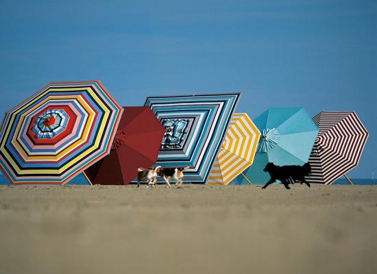 Schirmreihe
