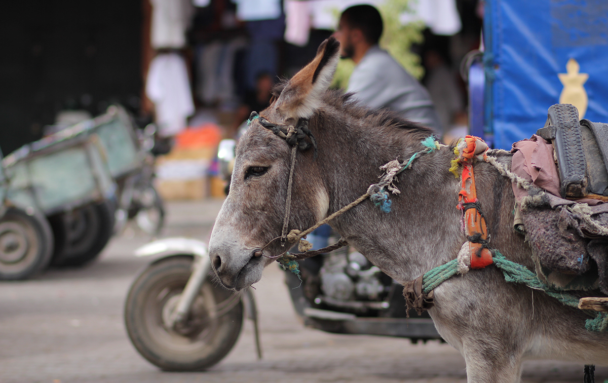 Perle des Südens: Best Of Marrakesch