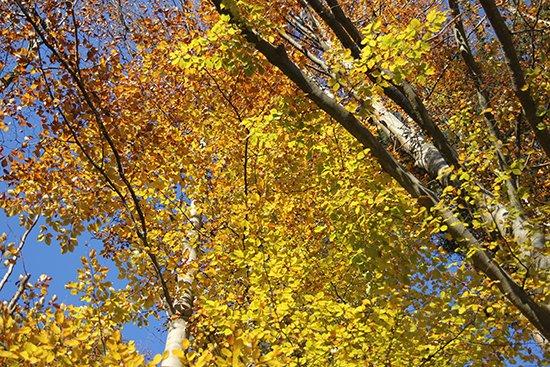 Herbst in Tirol: Hechtsee