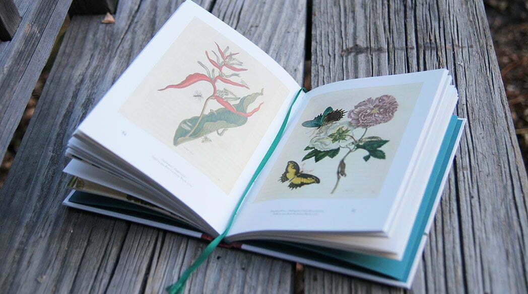 Buch-Tipp: Merians Reise zu den Schmetterlingen
