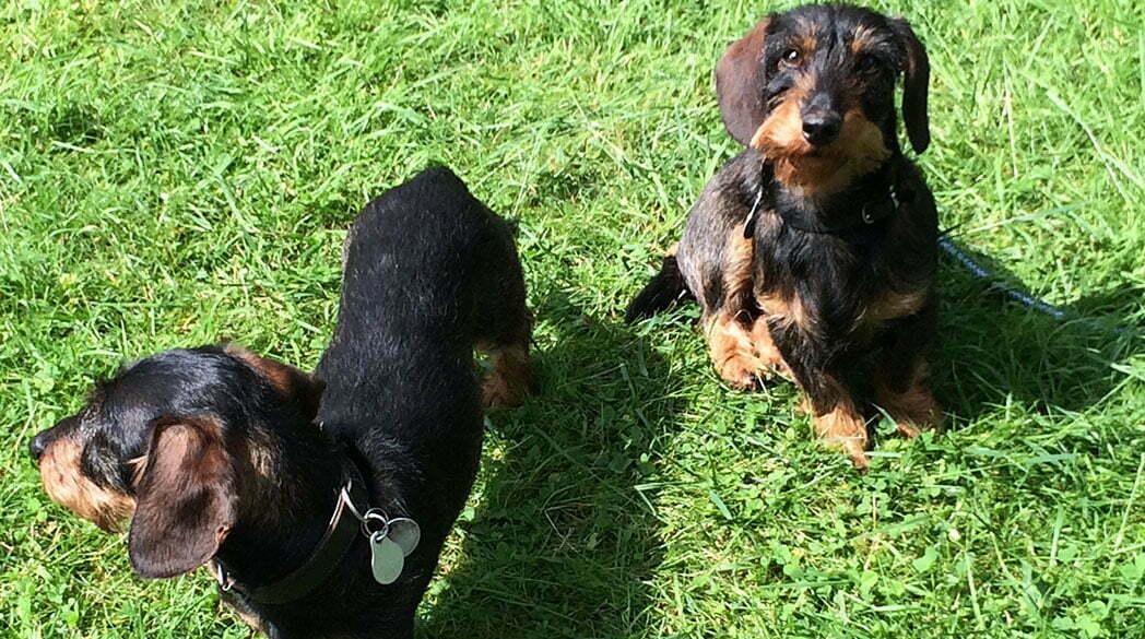 Emil bellt: Urlaub im Hundehotel!