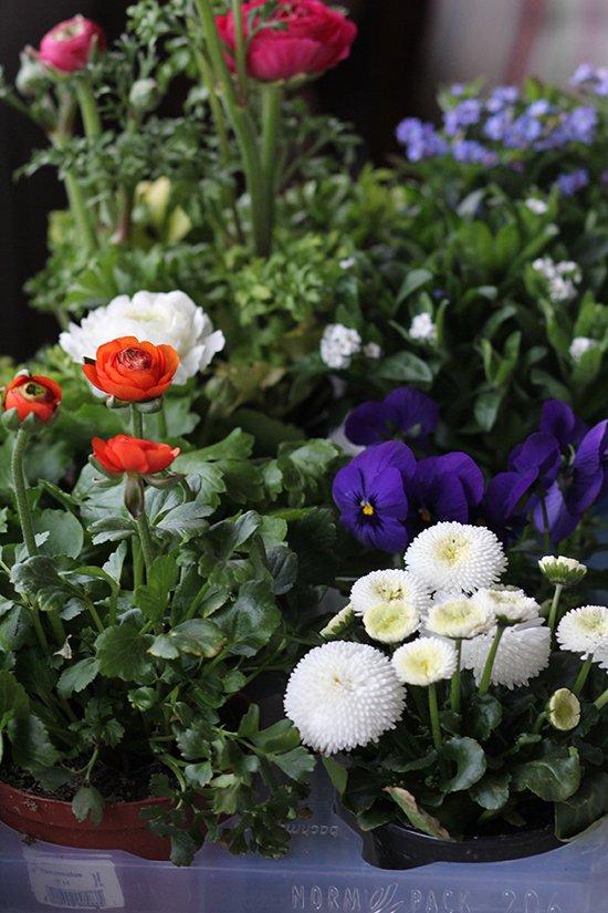 Frühlingsblüher für den Balkon