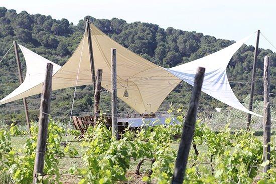 Weinprobe im Weingut San Giovanni