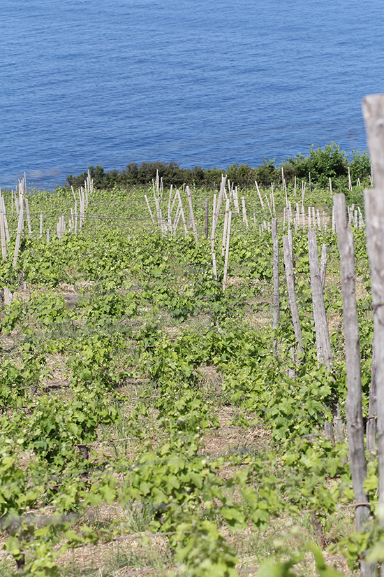 Weingut San Giovanni im Cilento