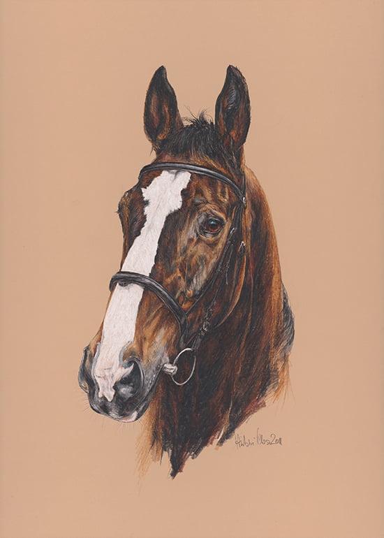 Pferde-Portrait von Gabriele Hübner-Klose