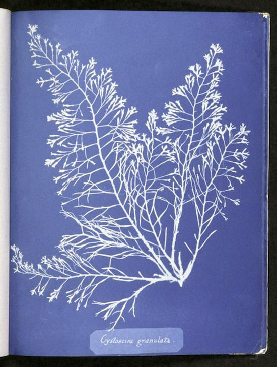 Murals Wallpaper Anna Atkins
