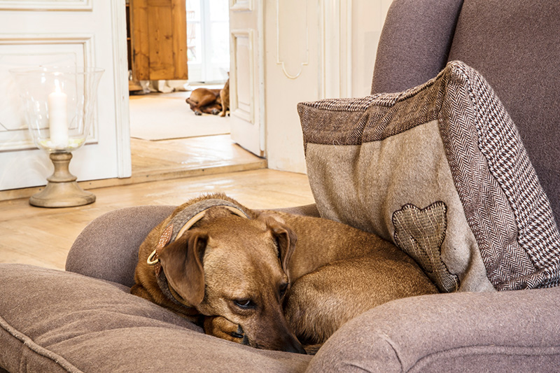 Gut Daxau: Ein toller Ort für Hunde