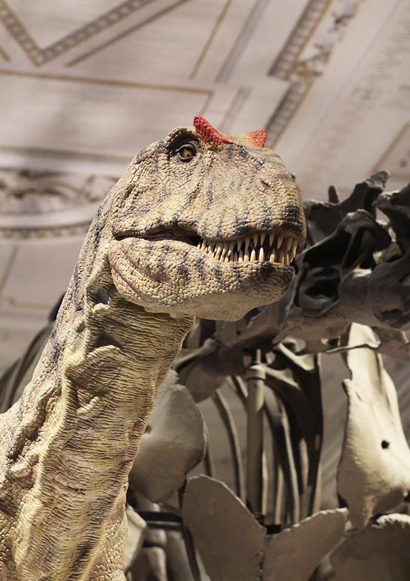 Dinos im Naturhistorischen Museum Wien