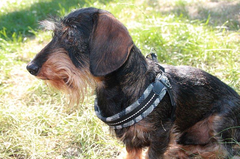 Hunde Geschirr von Treponti