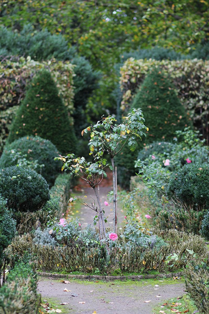 Rosengarten von Schloss Agathenburg