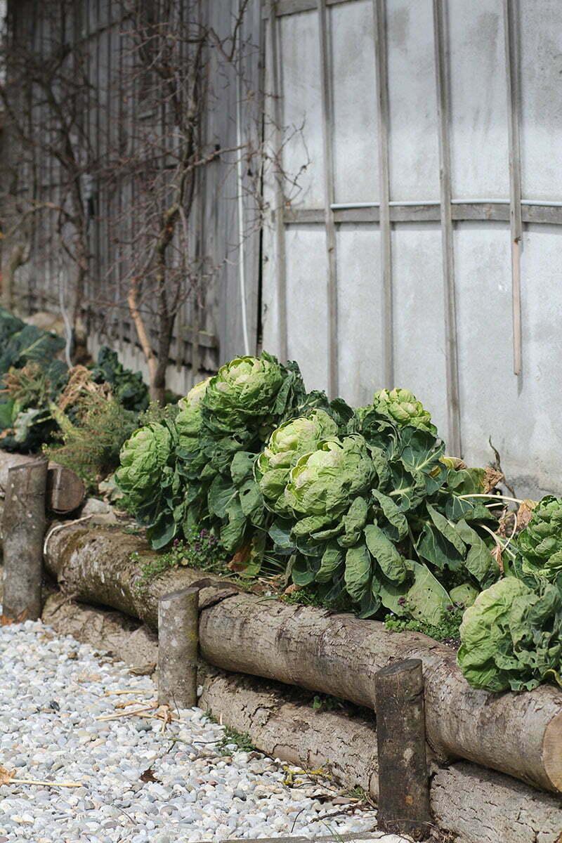 Wastlbauer Mattsee: Ferien auf dem Bauernhof