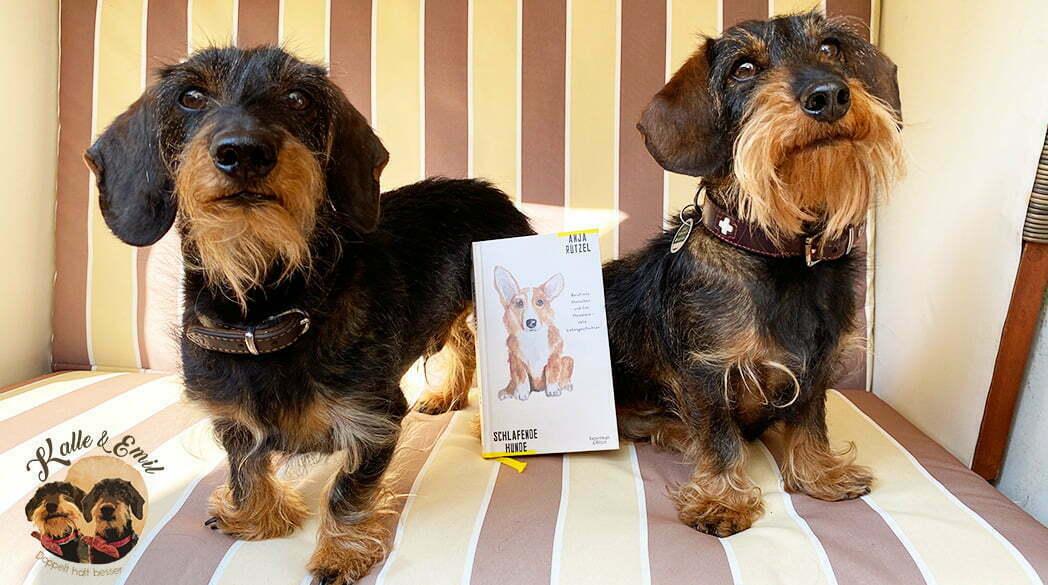 """Dackel Emil bellt: Wir lesen """"Schlafende Hunde""""!"""