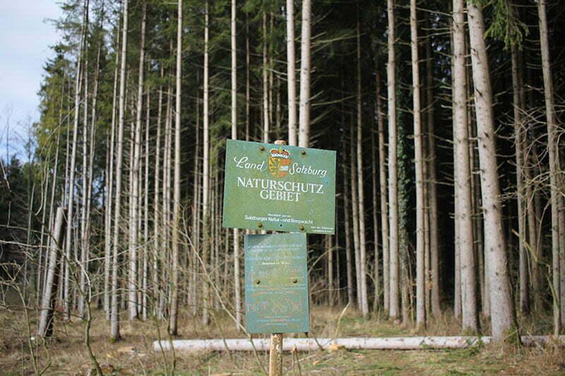 Mattsee Tipps: Wanderung am Grabensee