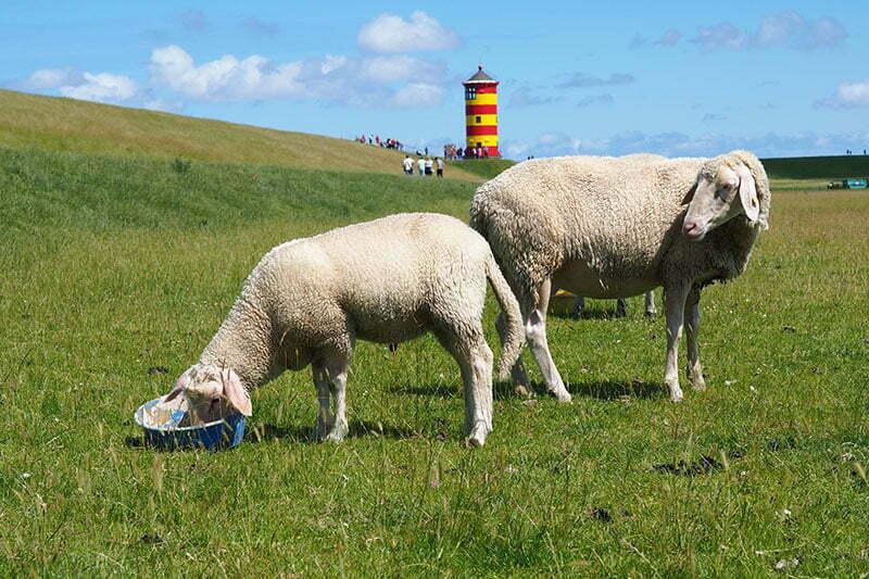 Ostfriesland Wanderung: Von Greetsiel zum Pilsumer Leuchtturm