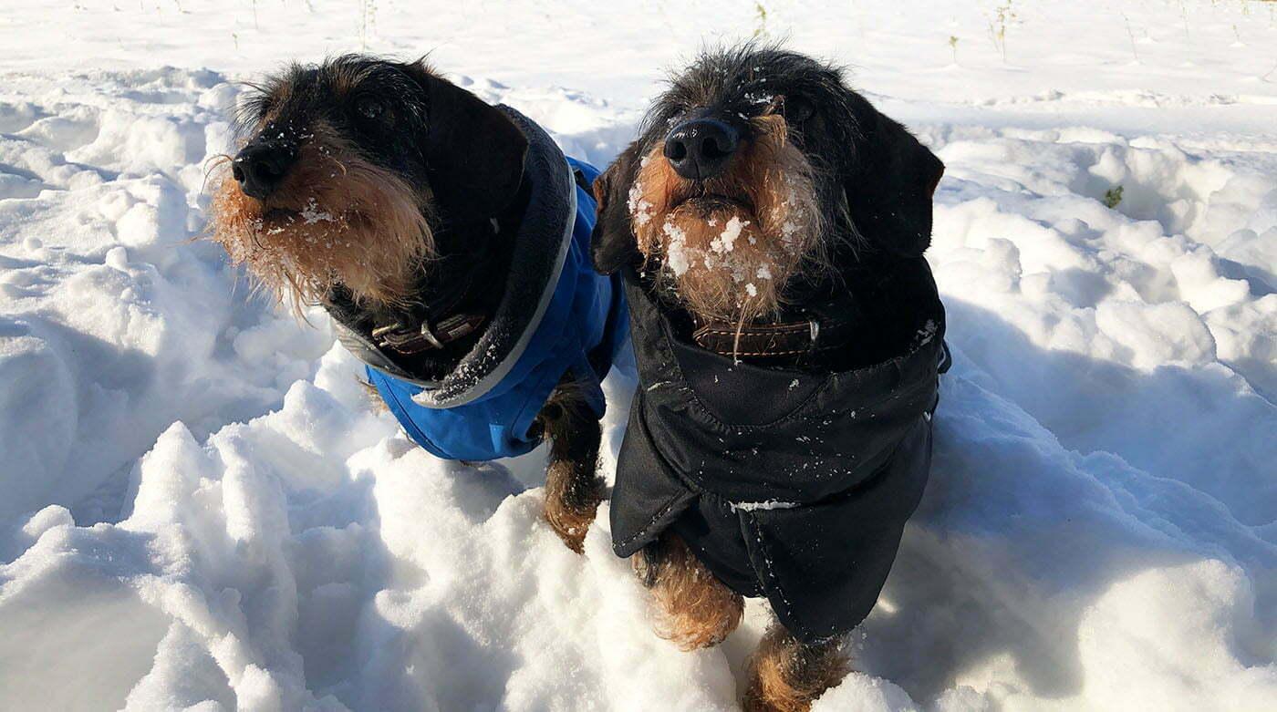 Blog-Dackel Emil bellt: Ab in den Schnee? Och nee!