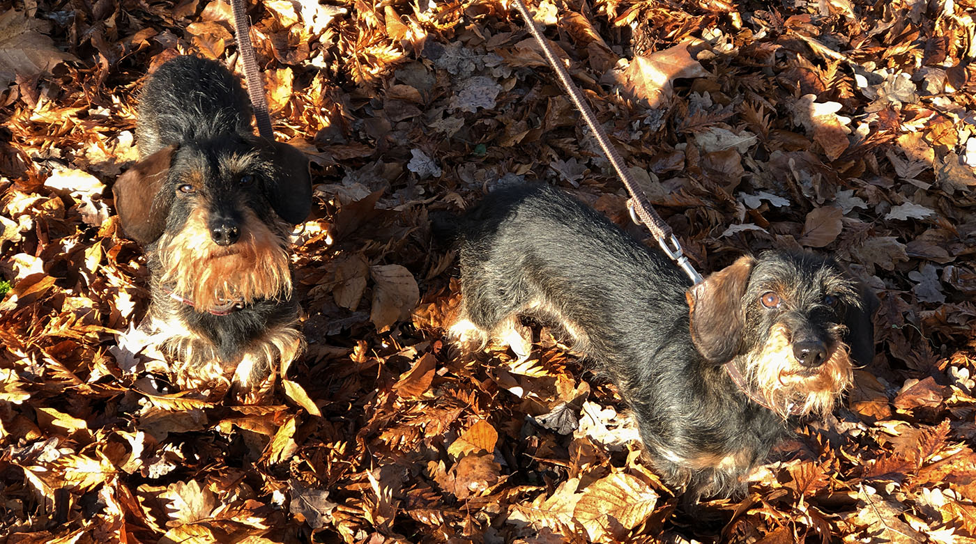 Emil bellt: Hunde-Knigge – Auch Hunde müssen sich benehmen!