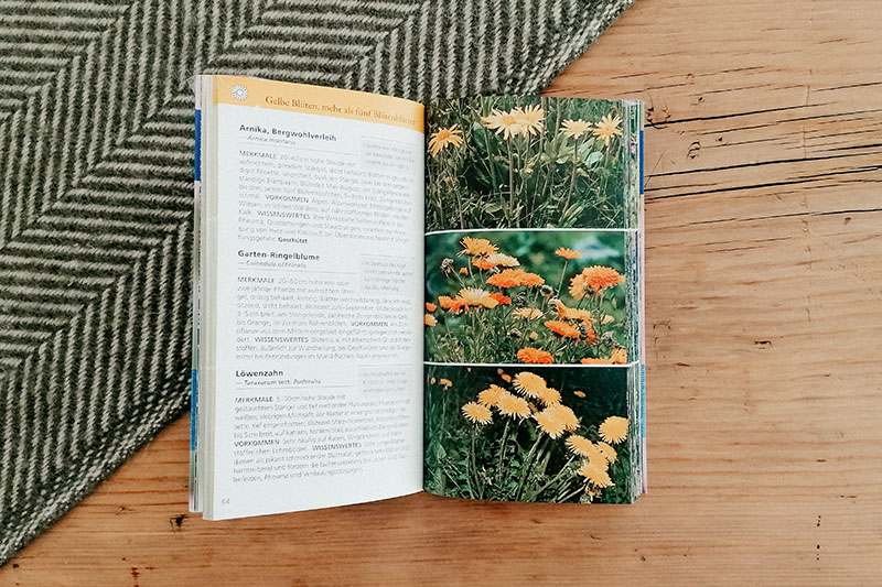 Pflanzen bestimmen: Welche Heilpflanze ist das? Kosmos-Verlag