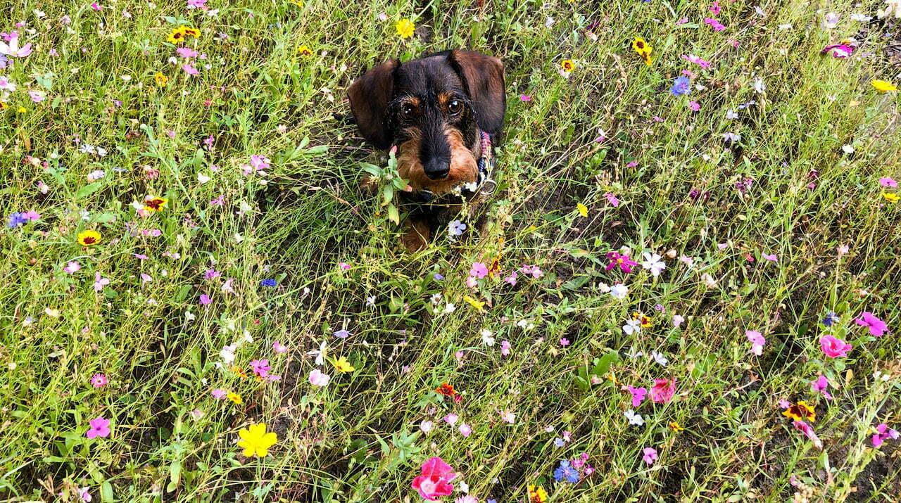 Blog-Dackel Emil bellt: Wir haben eine neue Spielwiese!