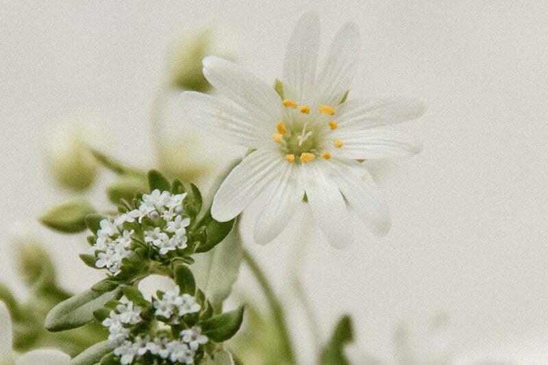 Blumenstrauß-Ideen mit Großer Sternmiere