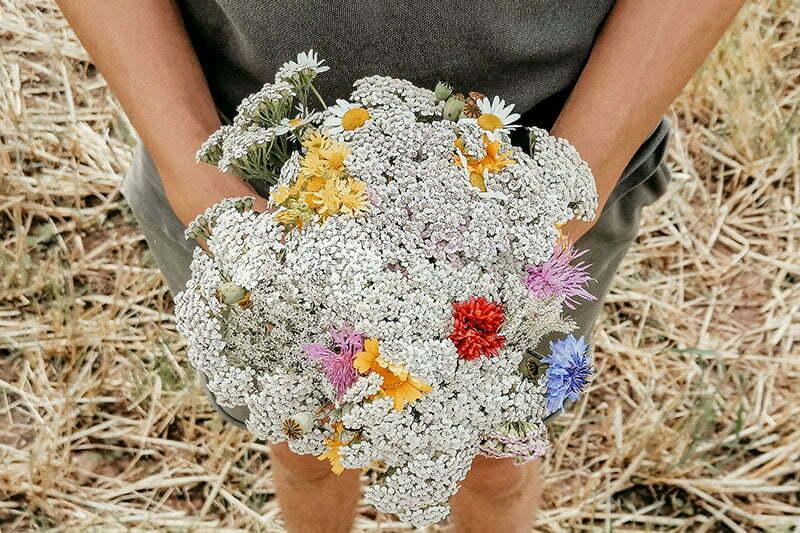 Wildblumen-Strauß mit Schafgarbe