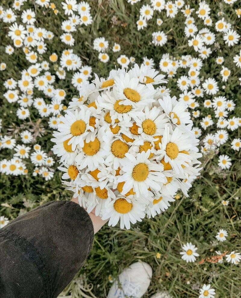 Ideen für Wildblumen: Margeriten